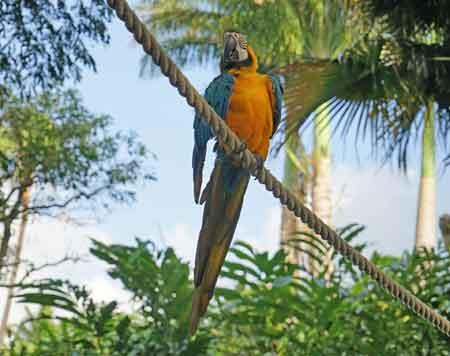 Guadeloupe Jardin Botanique Deshaies Antilles Coluche Informations