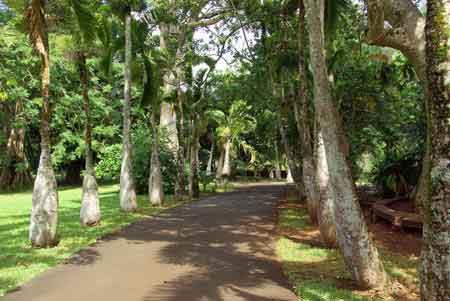 Pamplemousses le plus beau jardin botanique de l 39 ile maurice for Jardin beau vallon maurice